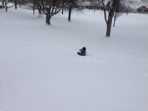 sledding 2015 2
